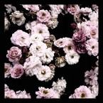 Vintage Rose Luxury Square Scarf_90x90_web